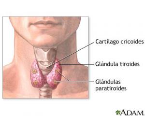 SALUD: Hipertiroidismo y sus síntomas