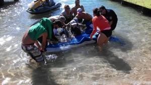 Ballenas varadas en playa Crash Boat de Aguadilla
