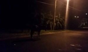 Molestos residentes de urbanización de Mayagüez por inacción Municipio ante problema de caballos realengos