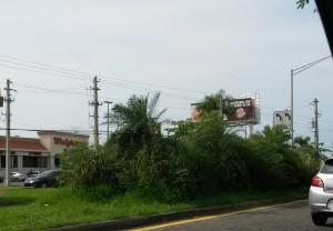 Descuidadas las isletas en la PR-2 de Mayagüez