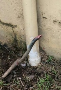 """Ante falta de vigilancia nocturna, pillos """"frecuentan"""" Escuela Barreto de Mayagüez"""