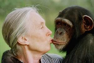 Histórica visita de Jane Goodall a Mayagüez invitada por grupo ambientalista del RUM