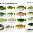 Muestra de los peces que pueden producir Ciguatera (Archivo).