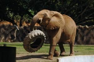 Cierra el Zoológico de Mayagüez mañana sábado por mantenimiento