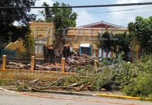 Critican corte de árboles en escuela elemental Farragut de Mayagüez