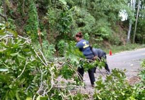 Sin incidentes mayores Mayagüez tras el paso de Erika