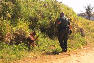 Detienen 20 indocumentados dominicanos y haitianos esta madrugada en Aguada