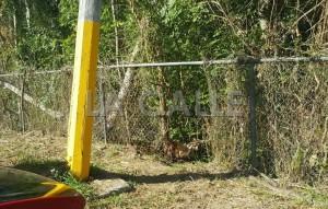 Acusan Alcalde de Cabo Rojo de eliminar letrinas portátiles en pulguero