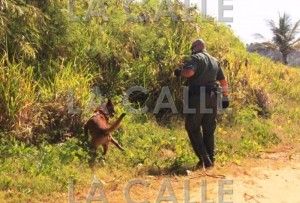 No arrestaron ninguno… Reportan desembarco de indocumentados esta mañana en Rincón