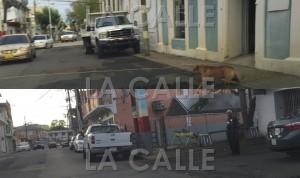 """En la foto el cable del supuesto """"arrimo"""" de energía eléctrica entre una facilidad municipal y el local del comité PPD en Añasco (Suministradas)."""