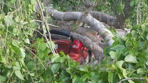 Carro aplastado por un árbol en carretera de La Bajura en Cabo Rojo
