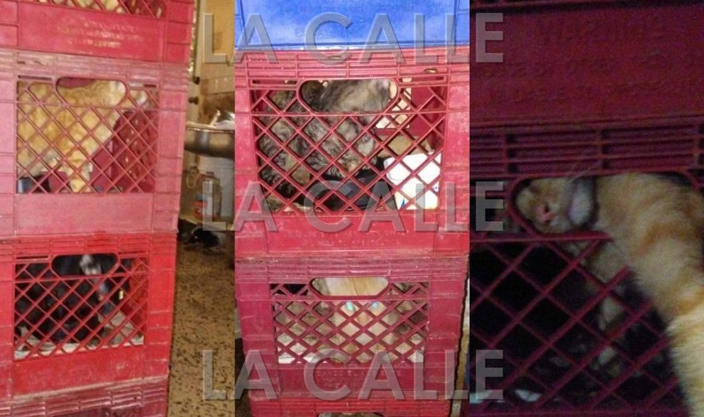 Los animalitos fueron rescatados el viernes en la tarde (Suministradas).