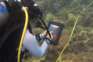 Estudiantes doctorales del RUM crean aplicación para identificar peces