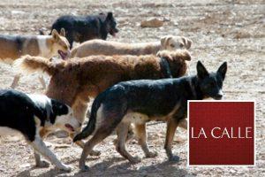 Se reportan dos ataques por perros realengos en el Pozo de Jacinto de Isabela