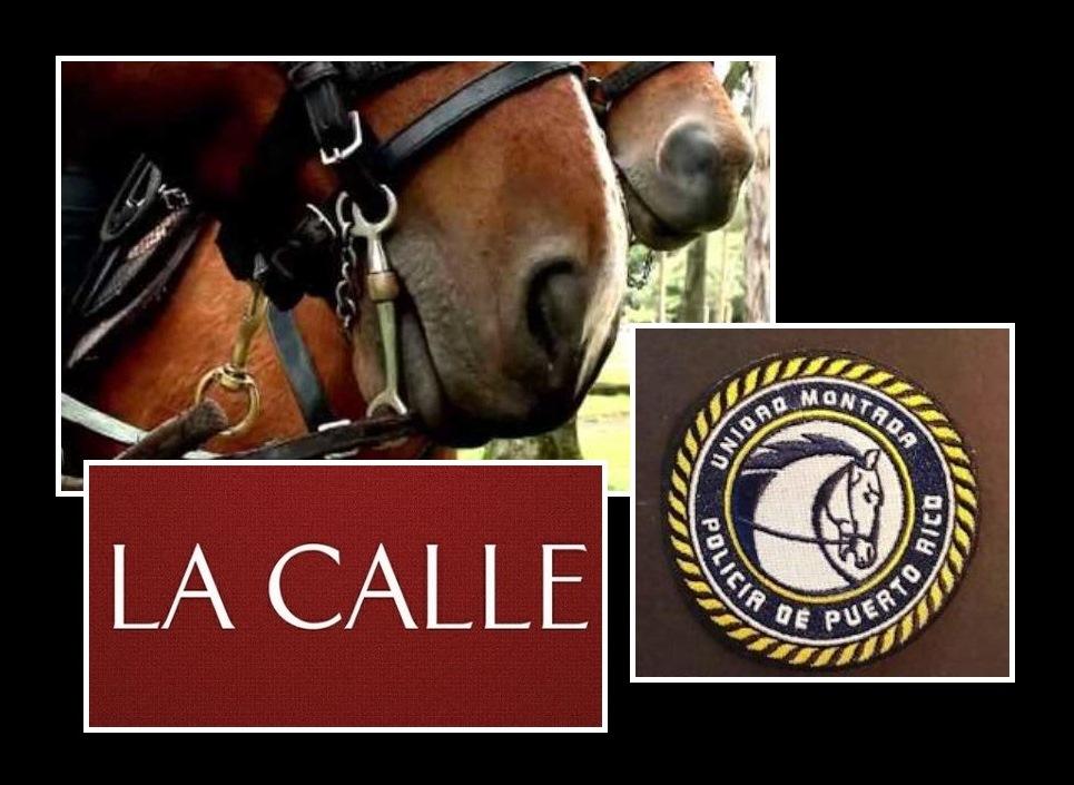 El caballo se asustó con la música en el Festival de la Novilla (Montaje/LA CALLE Digital).