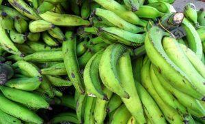 Meten preso anciano por robar plátanos en Moca