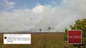 Ocupados bomberos con fuego forestal el sábado en Mayagüez