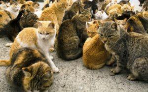 Encuentran 14 gatos muertos detrás de supermercado