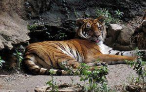 Continúan muriendo los animales… Recogen firmas para cerrar de una vez el Zoológico de Mayagüez