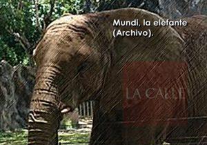 Portavoz de organización PETA exige cierre del Zoológico de Mayagüez