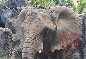 Políticos se siguen oponiendo… Alcalde de Mayagüez rechaza traslado de animales del Jardín Zoológico