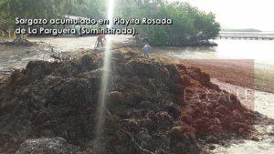 Sargazo provoca cierre temporero de Playita Rosada en La Parguera