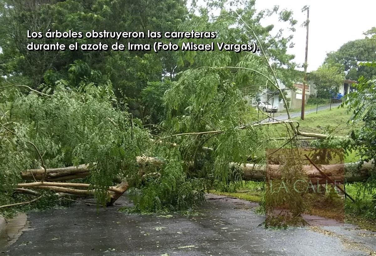 Irma (1) wm