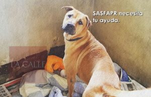 SASFAPR pide ayuda ante amenaza del azote de María