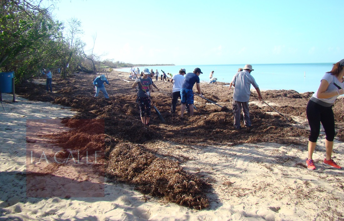 Limpieza Playa 002 wm