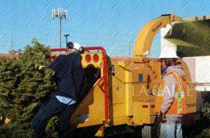 AAA informa reciclaje de árboles de Navidad para composta en el Oeste