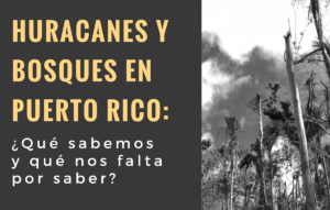 Presentan este jueves en el RUM conferencia sobre los huracanes y bosques en Puerto Rico