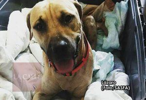 Ayuda a darle una segunda oportunidad a Lázaro… Santuario de Animales San Francisco de Asís pide ayuda para costear el tratamiento de perrito atropellado