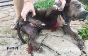 ¿La Gárgola? ¿El Chupacabras? ¿El Vampiro de Moca? Denuncian que animal extraño ataca perro en Aguada (Fotos)